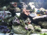 JacquesB - new-look aquarium pics 3