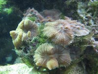 JacquesB - new-look aquarium pics - NEW UDPATES 2